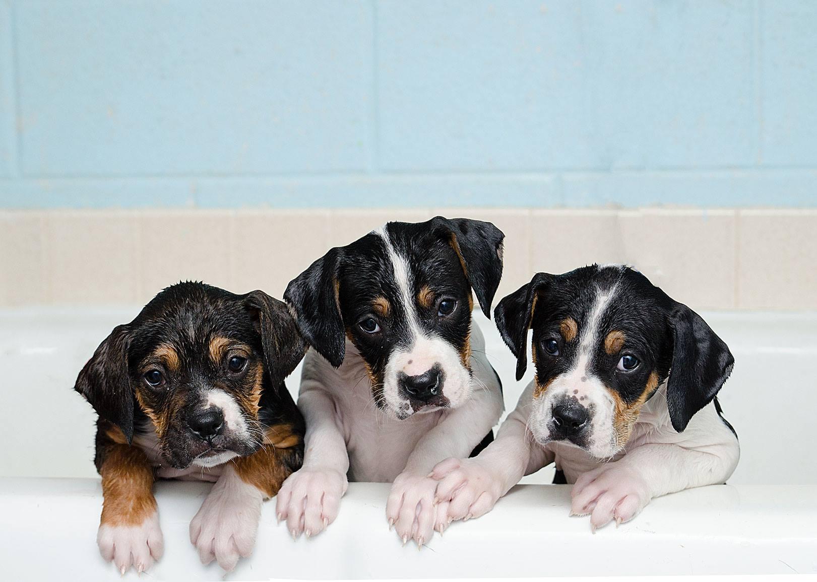 Pet Baths Nail Trims Lenawee Humane Society